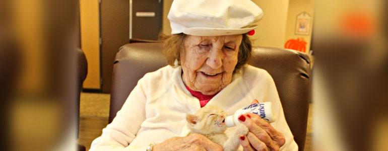 idosos cuidam de gatos em lar nos eua