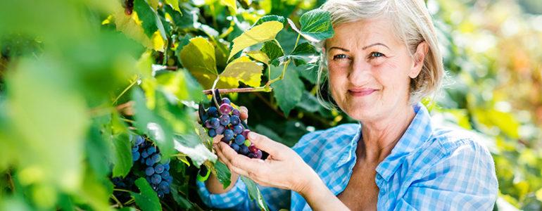 uvas ajudam memória de pessoas com início de alzheimer